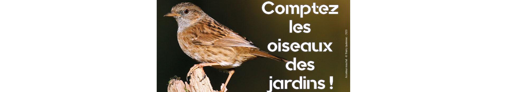 Comptage des oiseaux