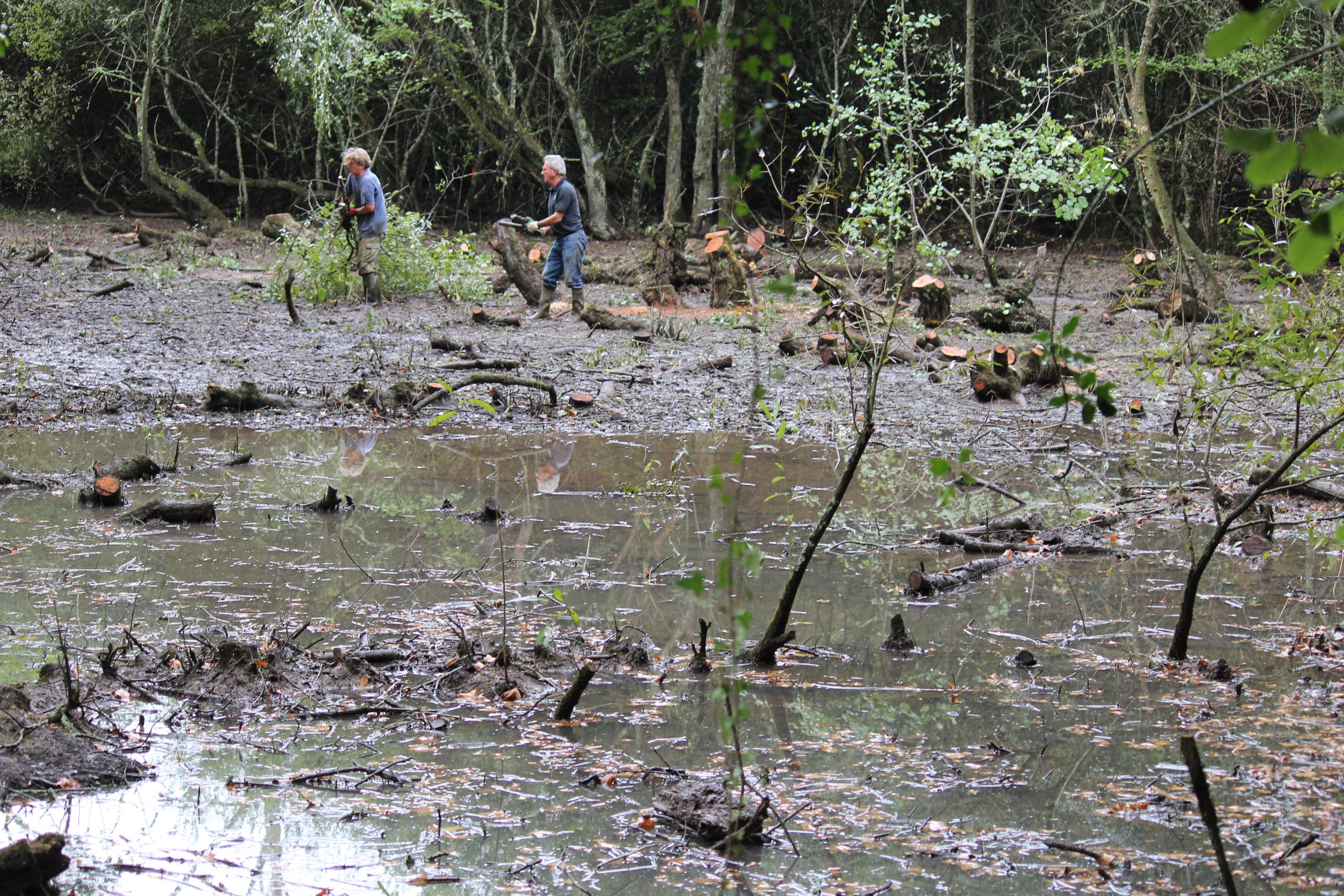 Travaux de réhabilitation du marais de la Gandonnière